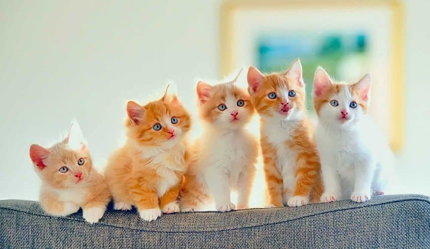 مراحل نمو القطط