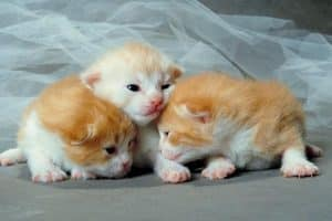 تربية صغار القطط