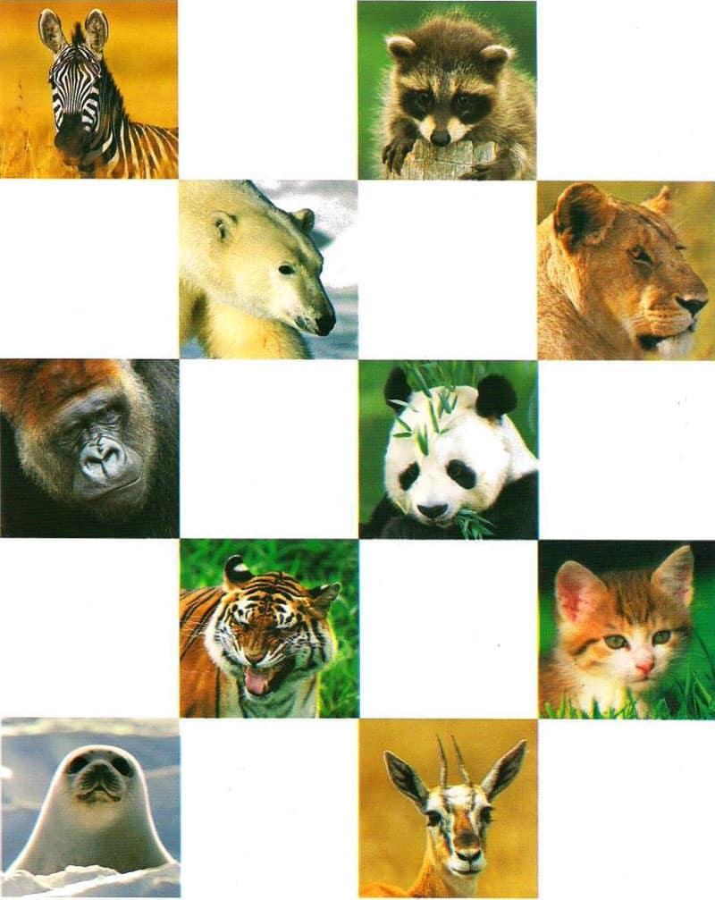الحيوانات اللبونة (الثديات)