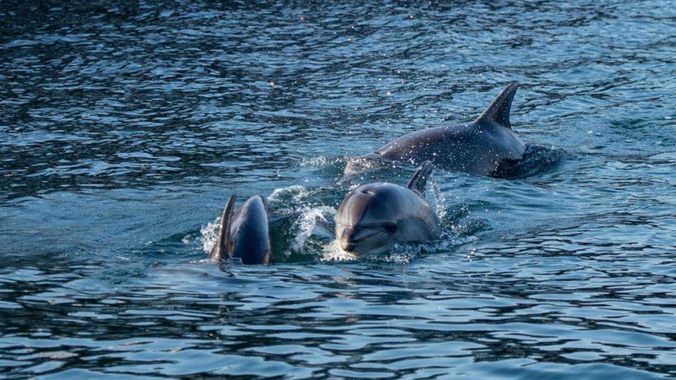 الدلافين في اسطنبول