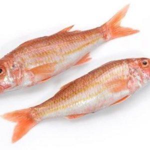معلومات عن السمكة الحمراء
