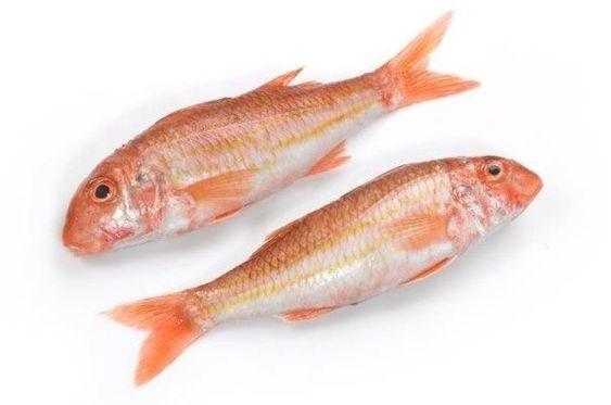 السمكة الحمراء