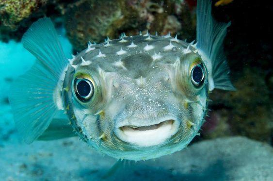 السمكة ذات الاشواك