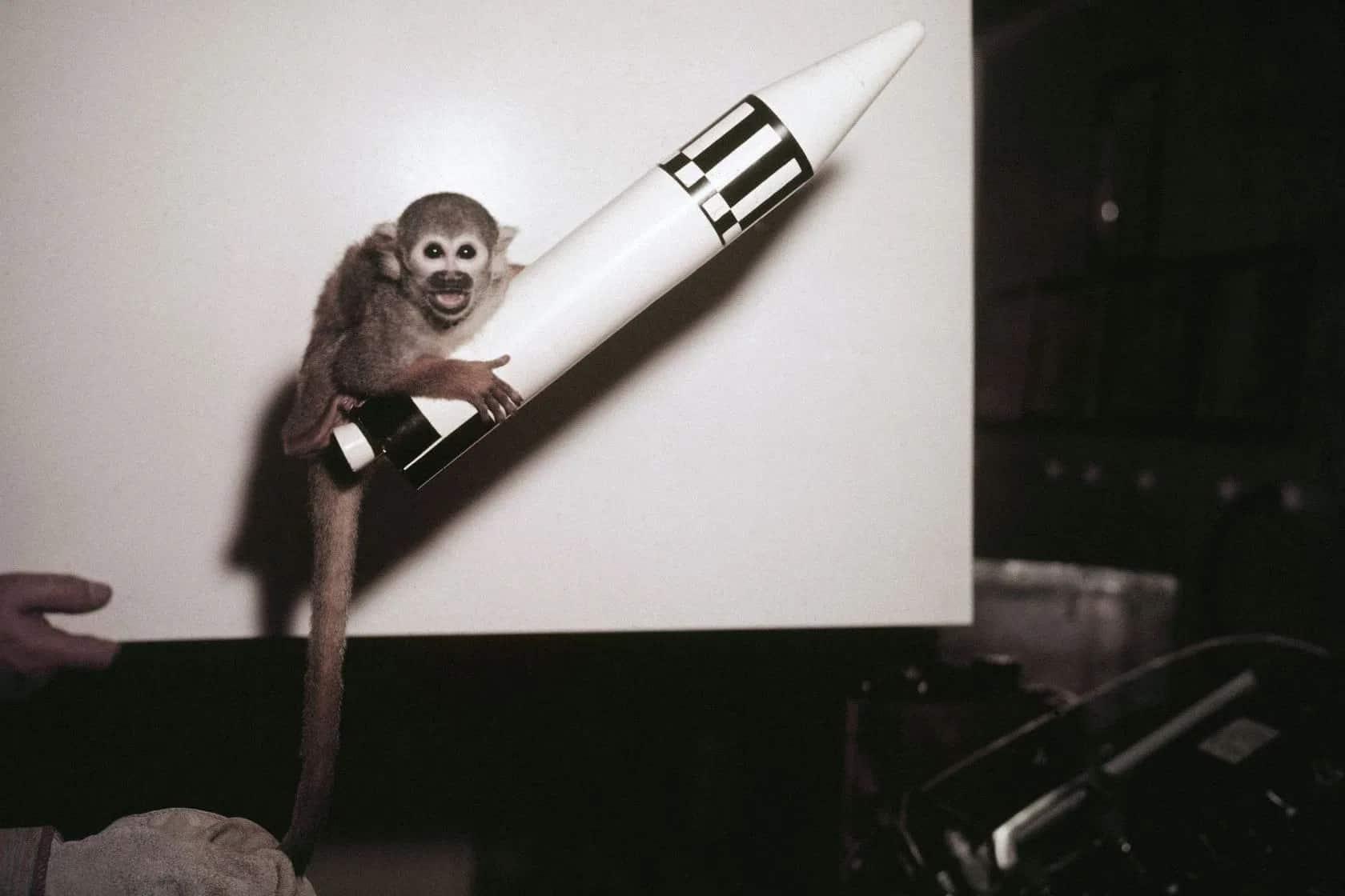 القرد بايكر