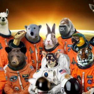 حيوانات تم ارسالها الى الفضاء