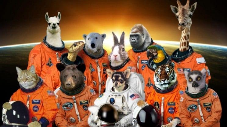 حيوانات في الفضاء