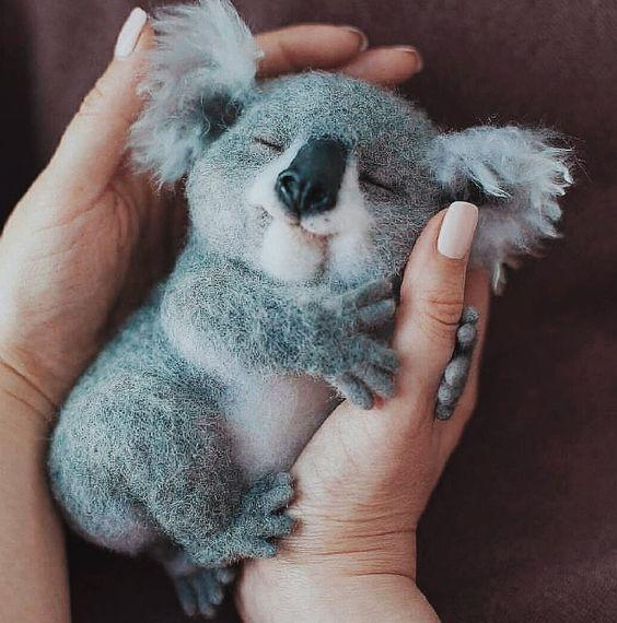 صغير الكوالا
