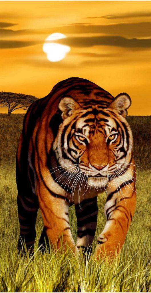 نمر بنغال