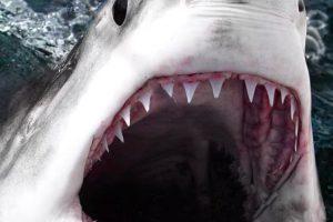 معلومات عن سمكة القرش