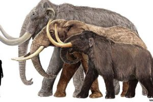ما هو الفرق بين الفيل والماموث ؟