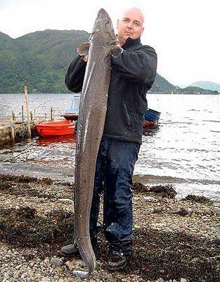 صيد سمكة الأنقليس