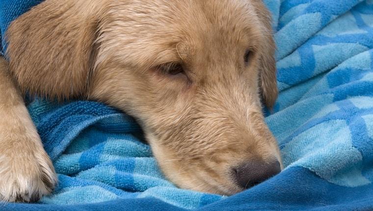 بطانية لحماية الحيوان