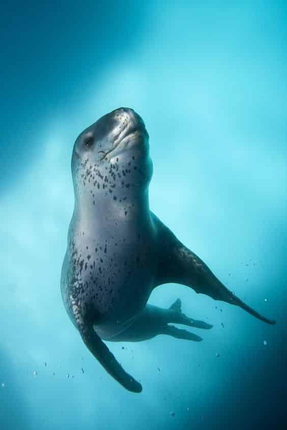 حيوان نمر البحر