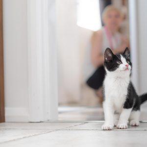 10 أشياء لا تعرفها عن القطط الصغيرة