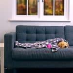Animal Friends Pet Insurance Experts