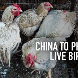 الصين تعلن عن خطط للتخلص التدريجي من بيع الطيور الحية