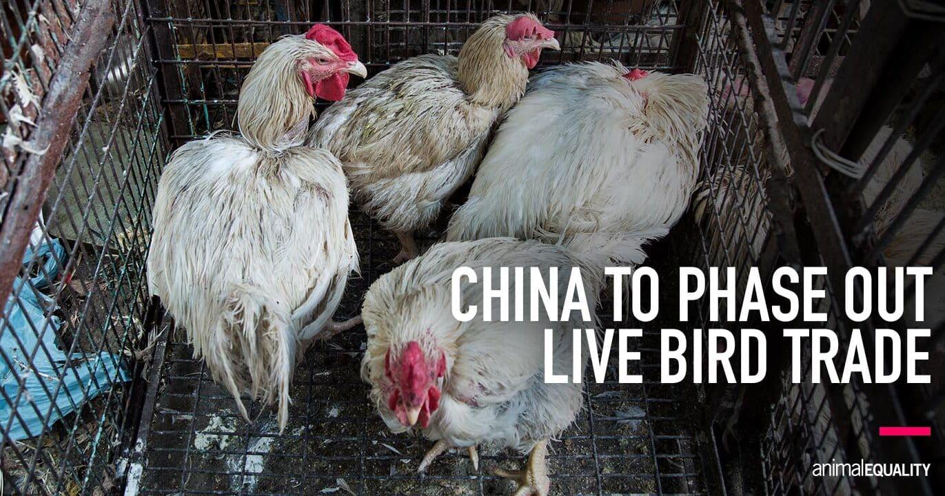 الصين تعلن عن خطط للتخلص التدريجي من بيع الطيور الحية للحوم