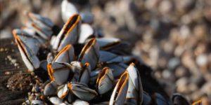 Barnacle (Cirripedia) - الحيوانات - الحيوانات AZ