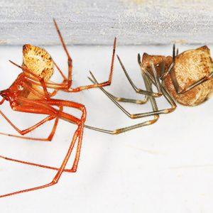 بيت العنكبوت – الوصف، الصور ، وحقائق مثيرة للاهتمام