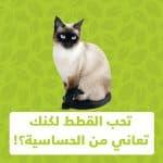 الحساسية من القطط
