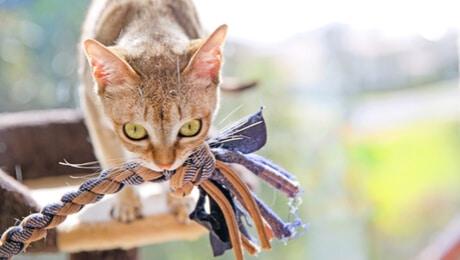 علاج عض القطط