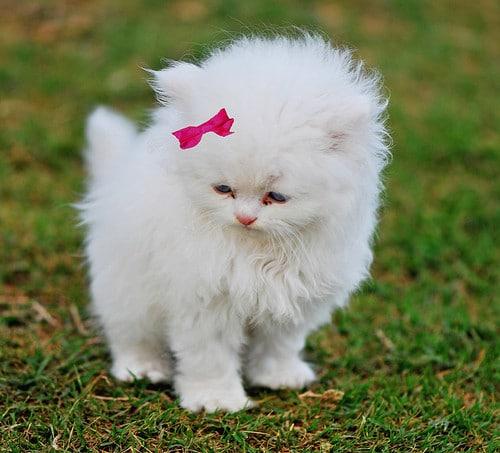 19 صورة جميلة للقطط الأليفة