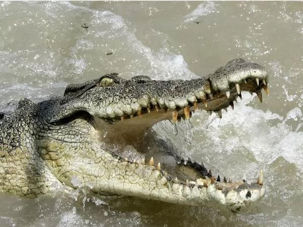 التمساح من أخطر الحيوانات