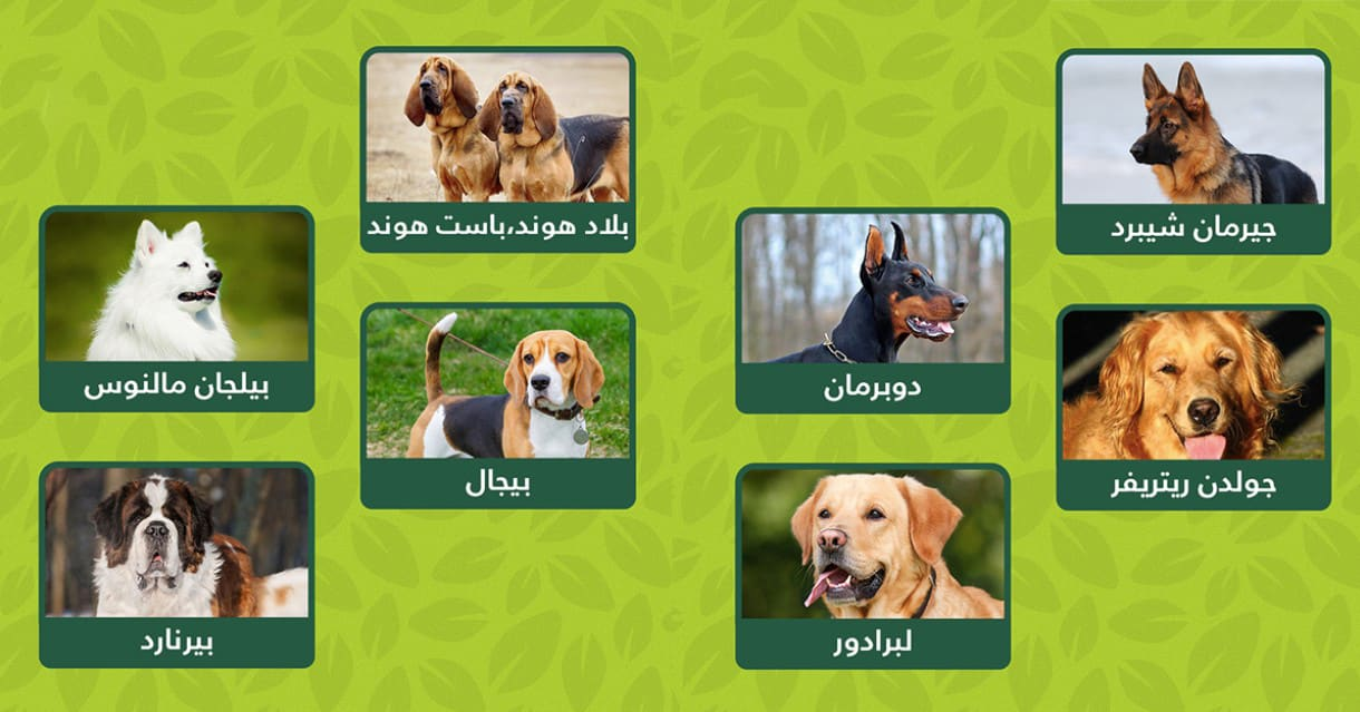 كلاب الانقاذ