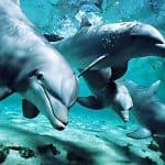 ماذا ياكل الدلفين