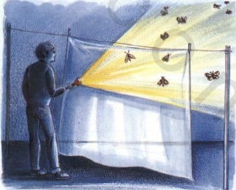 انجذاب الحشرات للضوء