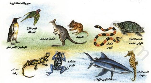 حيوانات فقارية