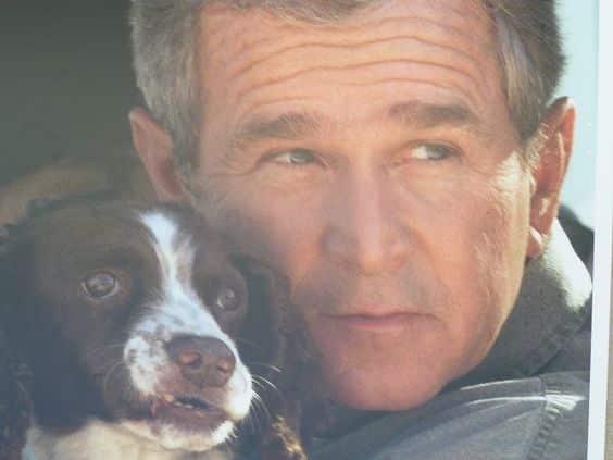 جورج بوش مع كلب سبرينغر
