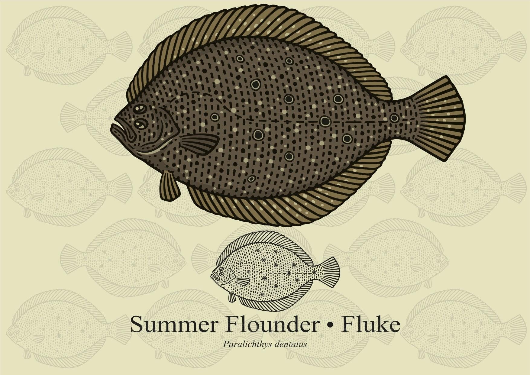 سمكة فلوك