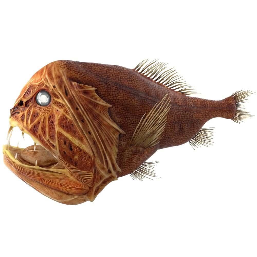 سمكة الفانج توز