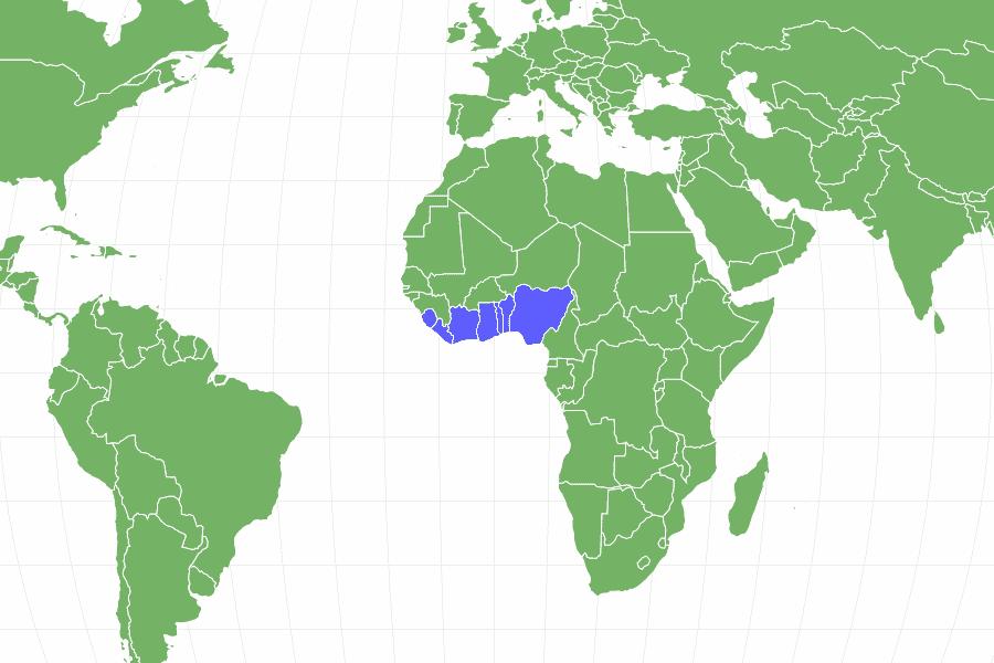 الحلزون الإفريقي العملاق