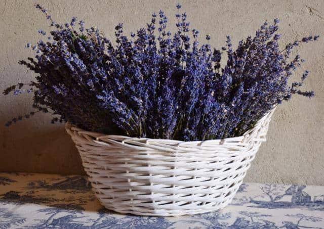 الخزامى يترك الزهور خصائص مفيدة الصورة
