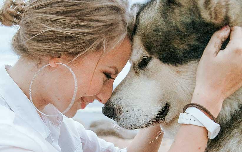 تعرف على الأنماط السلوكية لتدريب الكلاب