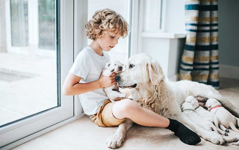 تغذية وإطعام الكلاب الحامل