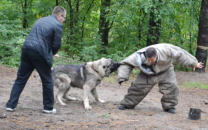 تدريب الكلاب على الإمساك