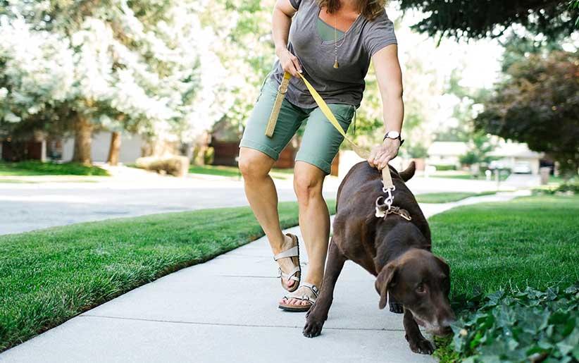 السيطرة على الكلب في المشي