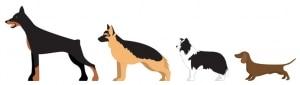 حجم الكلب المنغمس الذليل
