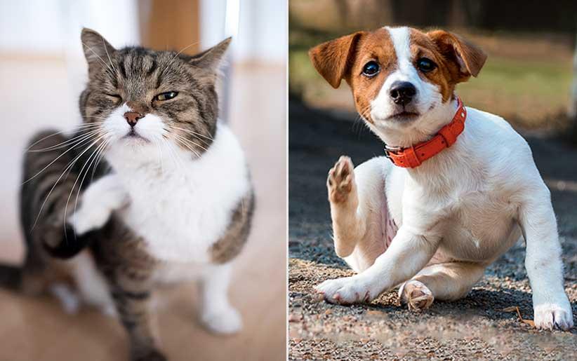 الكلاب والقطط تخدش نفسها