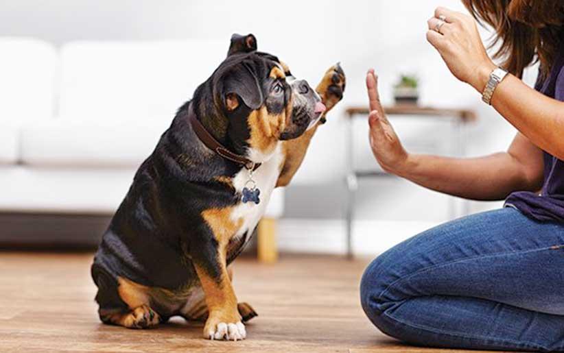 تدريب الكلاب على مبادئ علم النفس