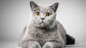 10 قطط في العالم تعرفوا عليها