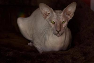 10 قطط في العالم تعرفوا عليها5