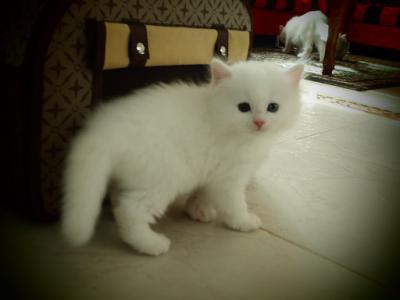 10 قطط في العالم تعرفوا عليها6